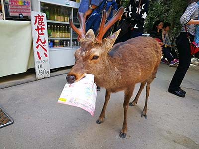 在日本旅游的时需遵守的礼仪