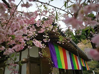 在日本比中国还多礼仪禁忌日本你了解多少